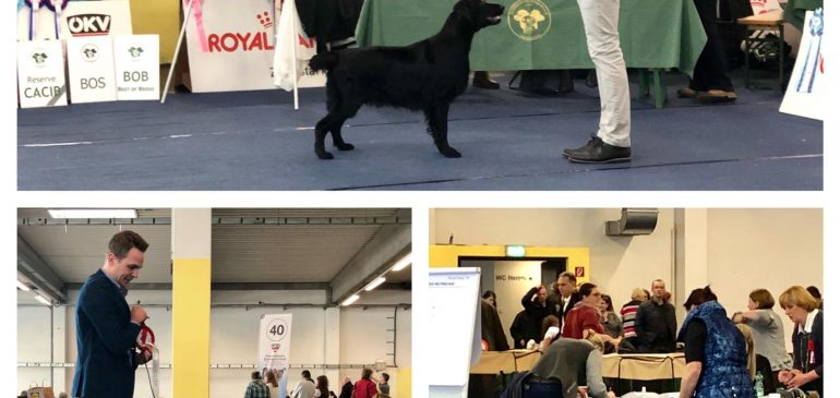 Fantastic Results at CACIB Wels 08.12.2018